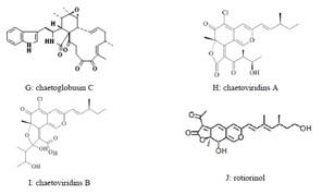 Nấm đối kháng Chaetomium